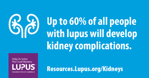 Learn How Our Research On Lupus Kidney Disease Helps Patients Now Lupus Foundation Of America